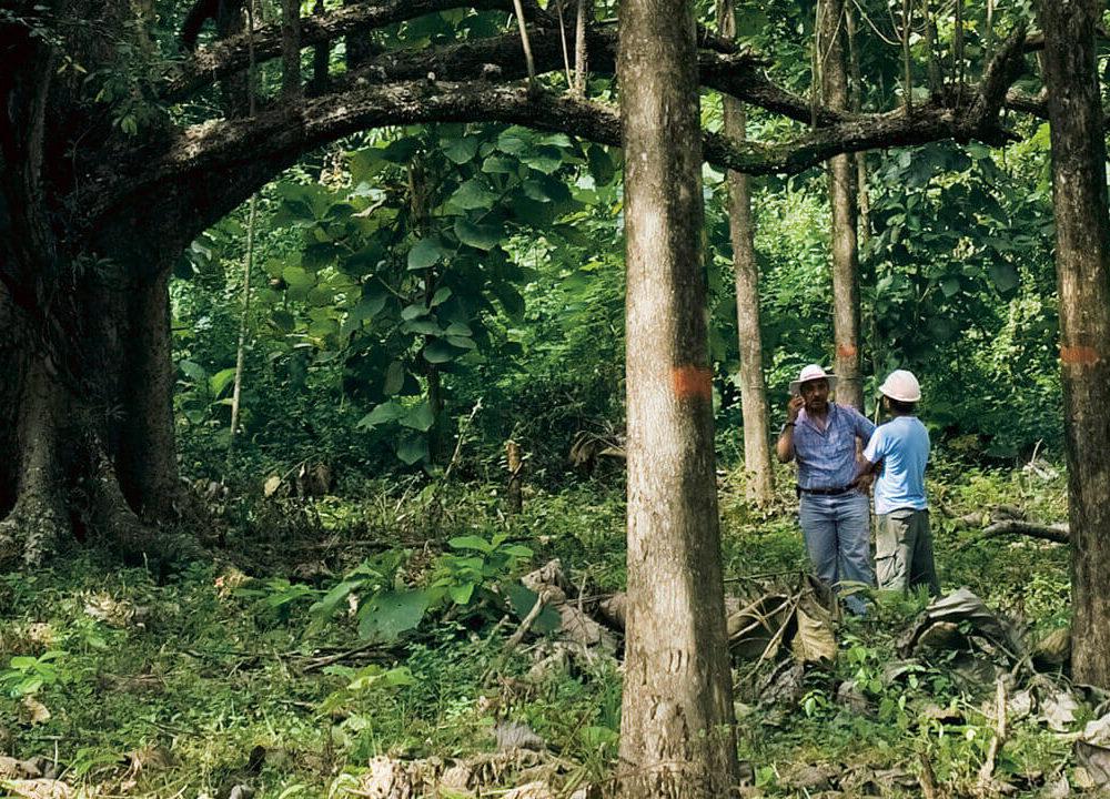 precious woods: wertvolle beiträge