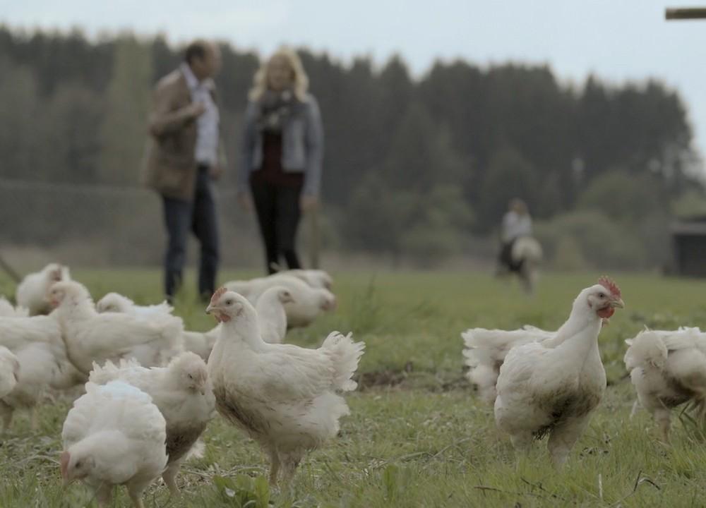 stauss geflügel: wie deutsches poulet schweizerisch wird